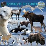 Polar Animals Clip Art Arctic & Antarctic Tundra Habitat Digital Stickers