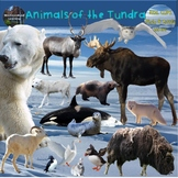 Polar Animals Clip Art Arctic and Antarctic Habitat Real C