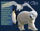 Polar Animals Clip Art Arctic and Antarctic Habitat Real C