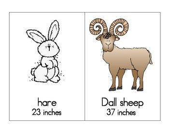 Polar Animals Measure