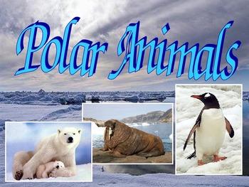 Polar Animals Science Unit