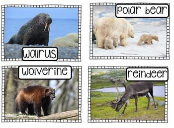 Polar Animals Vocabulary Cards and Activities