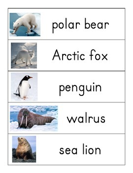 Polar Animals word wall