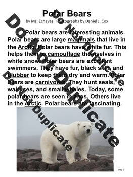 Polar Bear Close Read for K and 1st