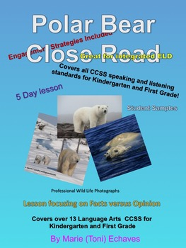 Polar Bear Close Read for K and 1st