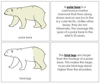 Polar Bear Nomenclature Book