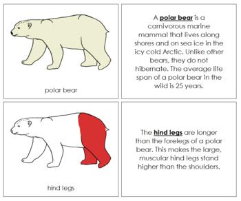 Polar Bear Nomenclature Book - Red