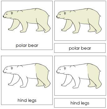 Polar Bear Nomenclature Cards