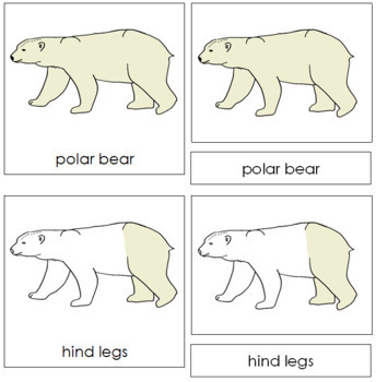 Polar Bear Nomenclature Cards