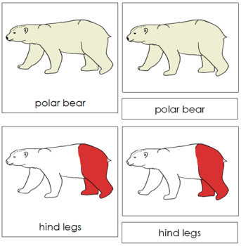 Polar Bear Nomenclature Cards (Red)