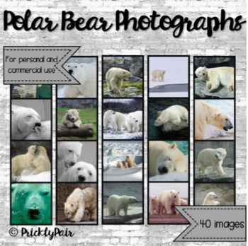 Polar Bear Photo Backgrounds