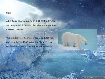 Polar Bear - Power Point Information Facts Pictures
