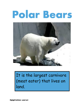 Polar Bear Research Pictures