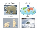Polar Bear Vocabulary and Photo Flashcards