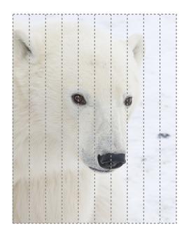 Polar Bear strip puzzle