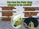Polar Bears - PowerPoint & Activities