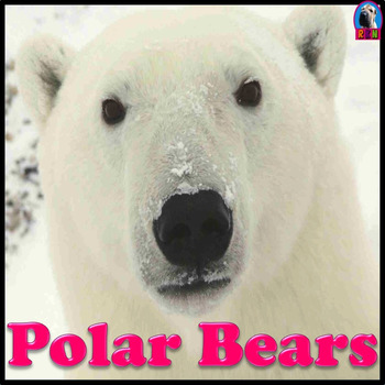 Polar Bears - PowerPoint & Activities