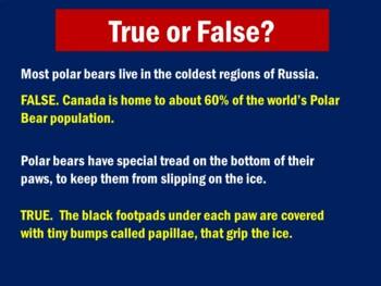 Polar Bears Activity | Polar Bears Unit | Polar Bears PowerPoint