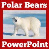 Polar Bears   Arctic Animals   PowerPoint   Kindergarten 1
