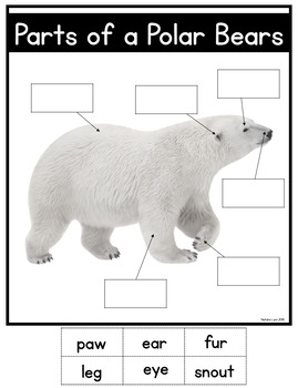 Polar Bears Unit