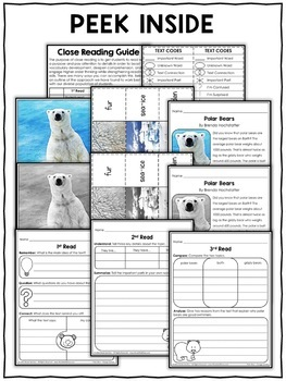 Close Reading Passage - Polar Bear Activities