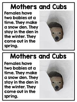 Polar Bears {A Complete Nonfiction Resource!}