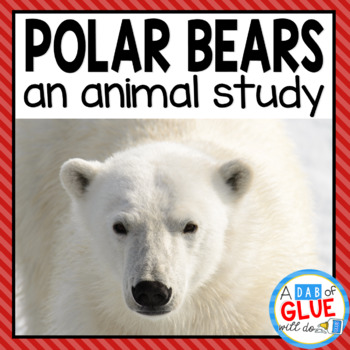 Polar Bears: An Animal Study