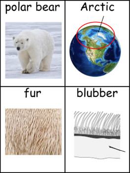 Polar Bears: Informational Text and Writing Activity