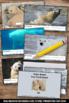 Polar Bears Passage, Winter Activities, Science Nonfiction Reading Comprehension