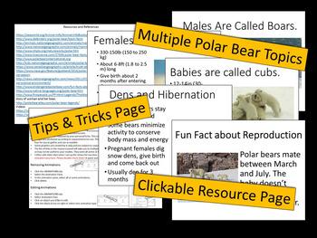 Polar Bears - PowerPoint