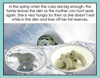 Polar Bears PowerPoint