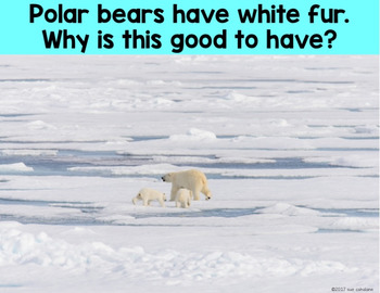 Polar Bears - Science Activities