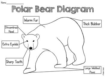 original 1629665 3 body diagram polar bears not lossing wiring diagram \u2022