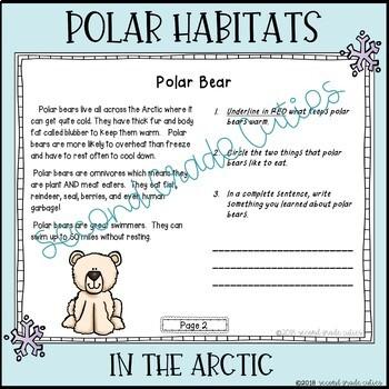 POLAR BEARS live at the North Pole!... An Arctic Habitat