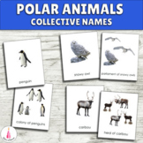 Polar Habitat Animals Collective Names Montessori 3-part cards