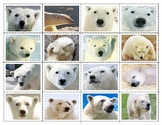 Polar Bears: Expressions  Mini Matching Cards