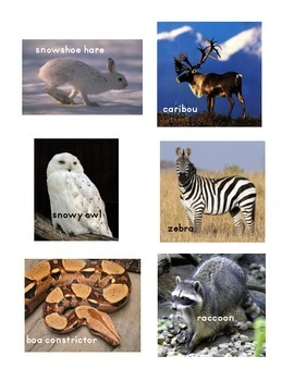 Polar vs Non-polar animal sort