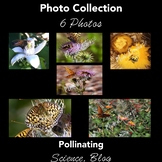 Stock Photos  - Pollinating - Bees and Butterflies