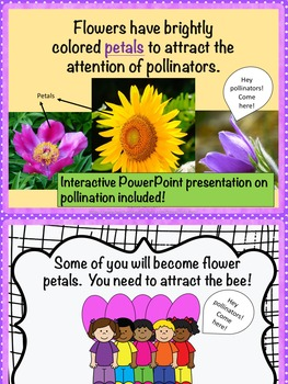 Pollination Games BUNDLE (NGSS Aligned)