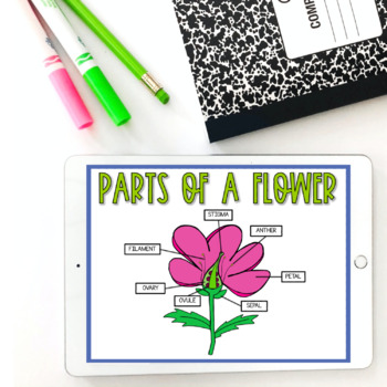 Pollination: Google Slides