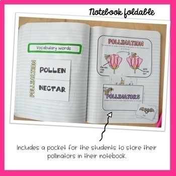 Pollination Interactive Notebook