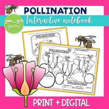 Pollination Interactive Notebook