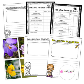 Pollination Paragraph Template