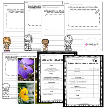 Pollination Paragraph Template English and Spanish Versions