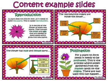 Pollination Teaching Resources