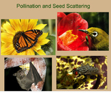 Pollination and Seed Scattering