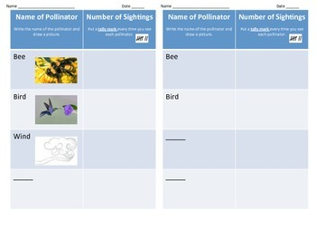 Pollinators Graphic Organizer