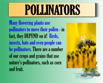 Pollinators and Seed Dispersal