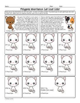 Polygenic Inheritance Cat Coloring Biology Homework Worksheet