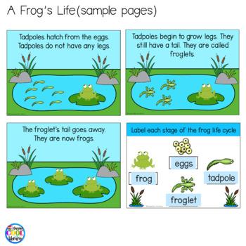 Pond Animals Mini Books